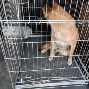 Rubber hondenbench